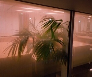 aesthetic, grunge, and plants image