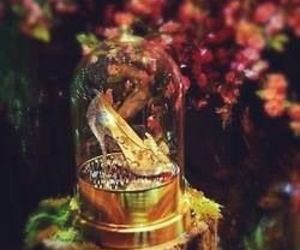 beauty, cinderella, and beautiful image