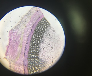 biology, micro, and nature image