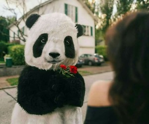 panda and flowers image