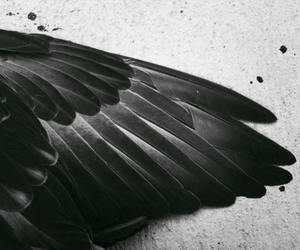 black, wing, and wings image