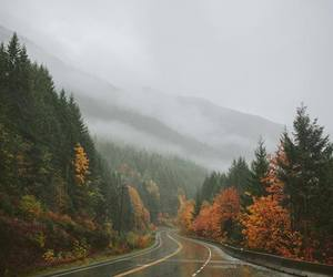 forest, rain, and road image