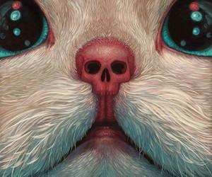 cat, skull, and kitten image