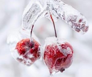 nature, winter, and cherry image
