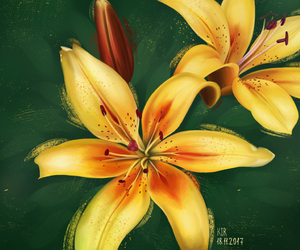 flowers and lilies image