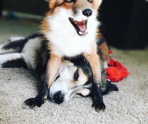 animals, dog, and friendship image
