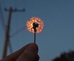 flowers, sky, and light image