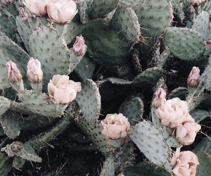 cactus, flowers, and pink image