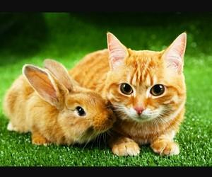 animals, jardin, and cute image