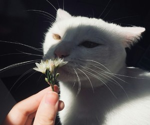 cat, flowers, and alternative image