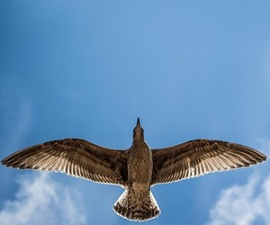 bird, fly, and blue image