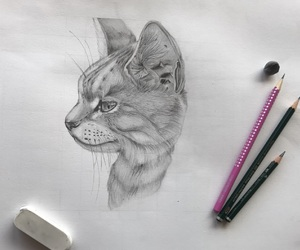 animal, art, and black and white image