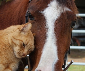 animals, cat, and horse image