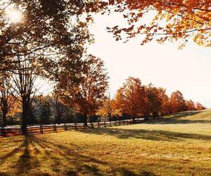 autumn, country living, and new england image