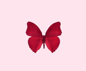mariposa, rojo, and fondos image