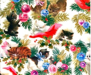 cat, christmas, and many image