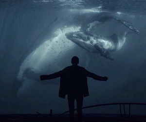whale, ocean, and water image