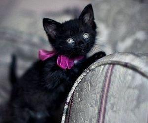 black cat, cat, and kitten image