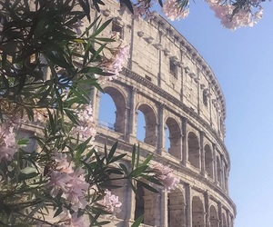 flowers, rome, and italy image