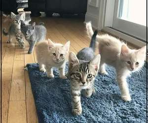 awww, cats, and cute image