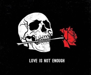 rose, quotes, and skull image