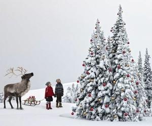 winter, christmas, and christmas tree image