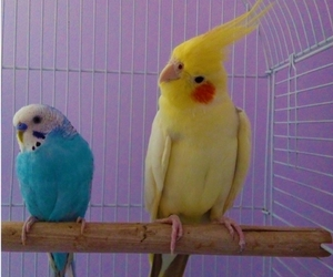 animals, beautiful, and parrots image