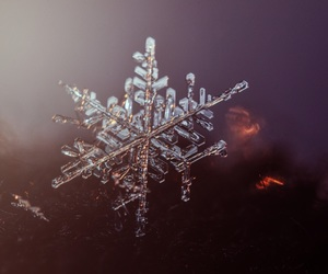 photography, snow, and snowflake image