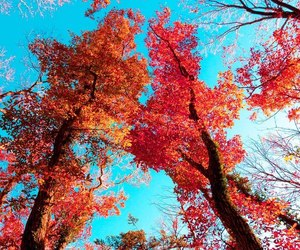 background, leaves, and red image