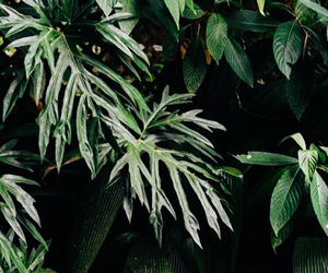 green, plants, and header image