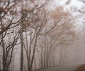 autumn, fog, and fall image