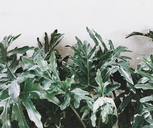 cacti, nature, and cactus image
