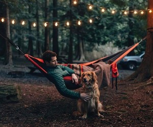 dog, lights, and nature image