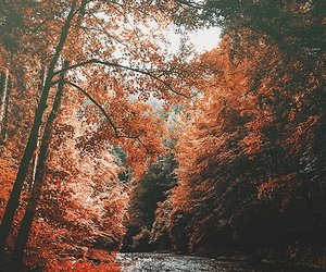 nature, autumn, and trees image
