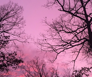 pink, sky, and tree image
