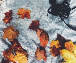 autumn, tb, and october image