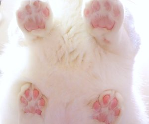 cat, animal, and paws image