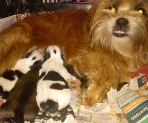 dogs, mother, and filhos image