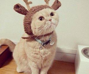 cat, animal, and christmas image