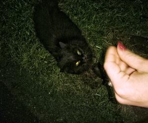 black, cat, and mr image
