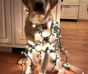 alternative, animal, and christmas lights image
