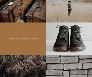 aesthetic, fantastic beasts, and newt scamander image