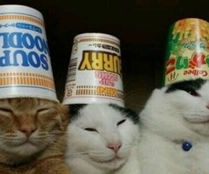 cat, noodles, and cute image