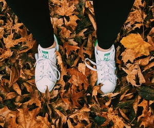 adidas, autumn, and cool image