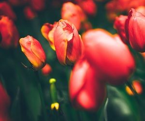 beautiful, plants, and red image