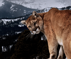 animal, beauty, and nature image