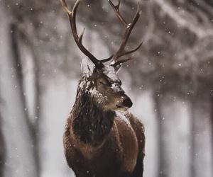 animal, christmas, and snow image