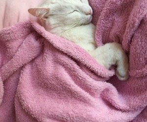 blanket, cat, and goal image