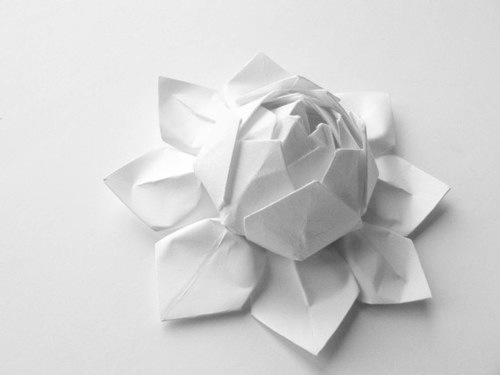 flower, white, and lotus image