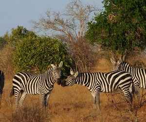 mombasa excursions tours image